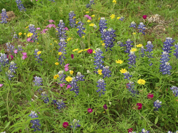 Multicolored